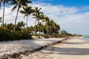 Picture of the shore in Key Biscayne Beach