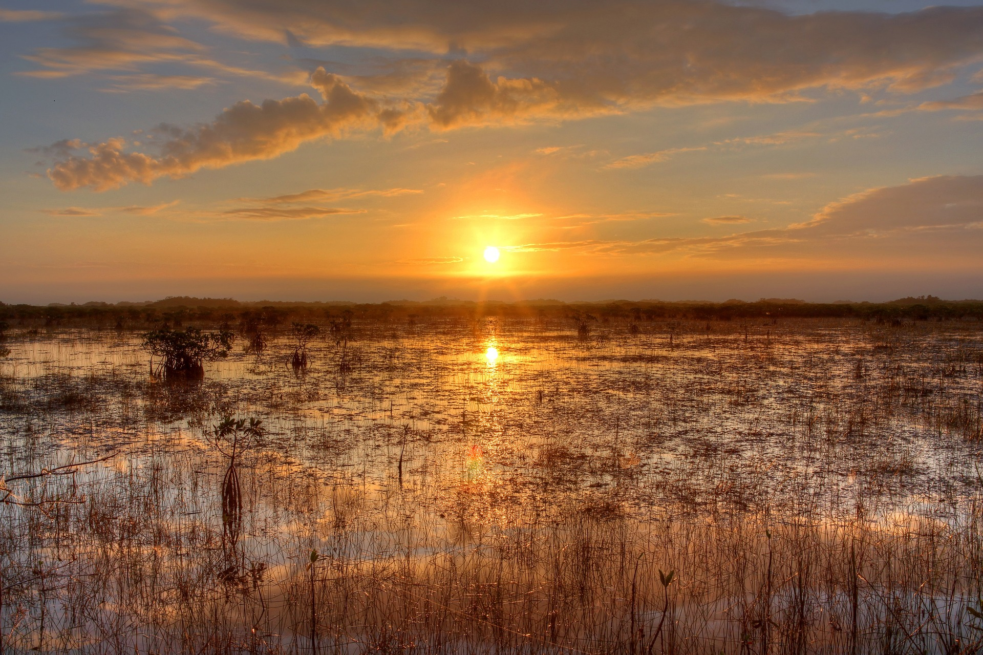 landscape picture of the everglades with sunset in the backgroun